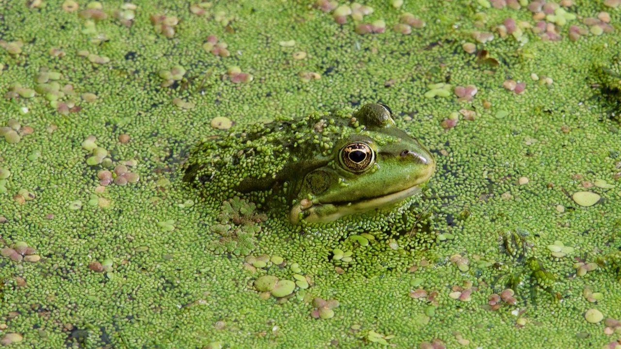 Frogs love Waterland